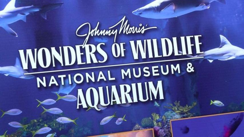 Public Opening of Wonders of Wildlife - Ticket Pricing_57199206