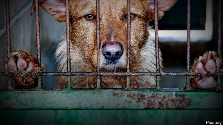 caged dog_1550446599575.jpg.jpg