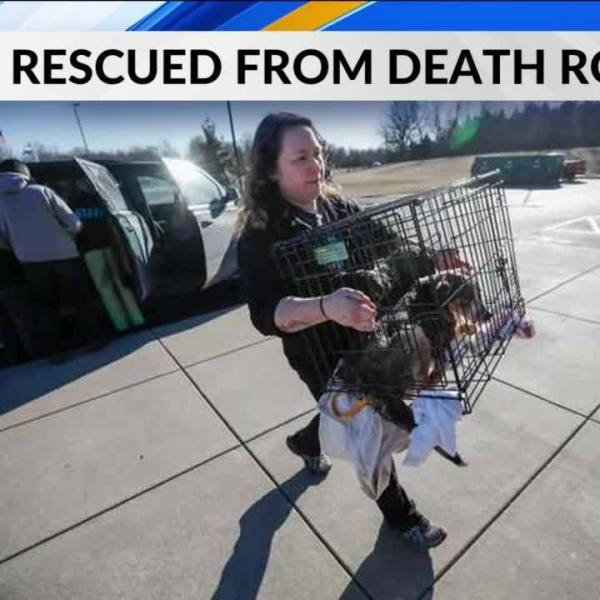 11_Dogs_Sprung_From_Oklahoma_Death_Row_S_4_20190309040700