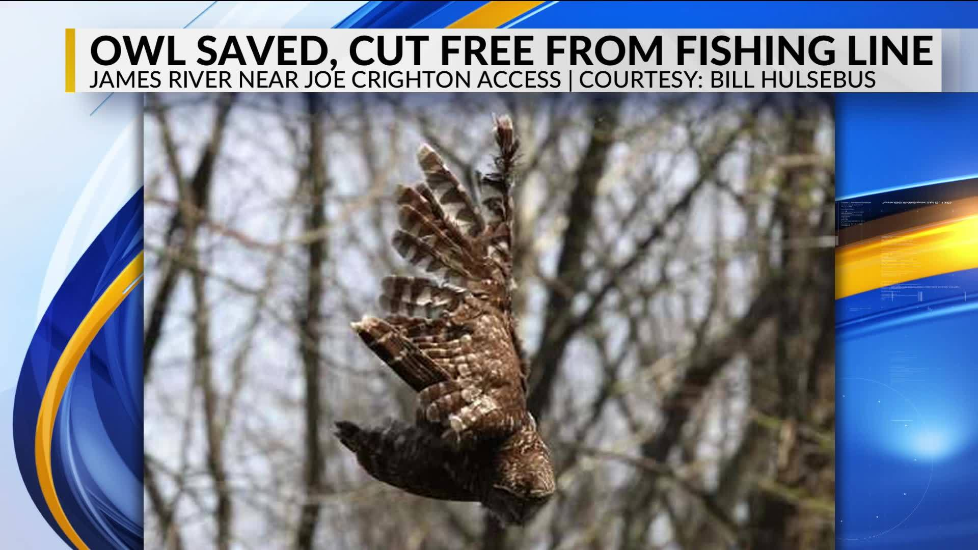 Owl_rescued_from_fishing_line_set_to_be__8_20190424223025