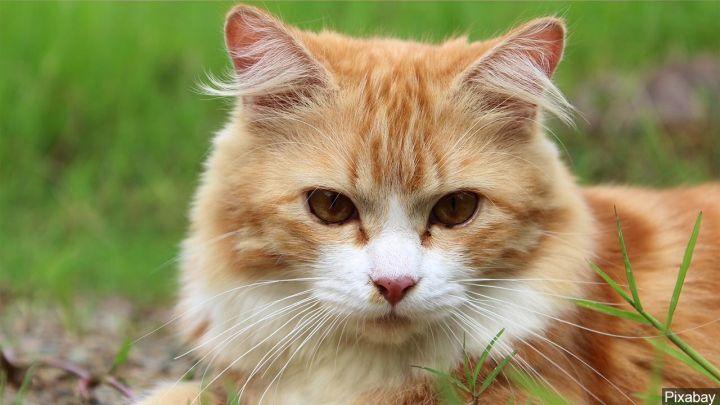 feral cat_1556377474783.jpg.jpg