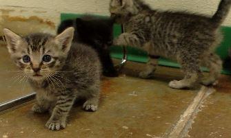 kitten web pic_1555113471148.JPG.jpg