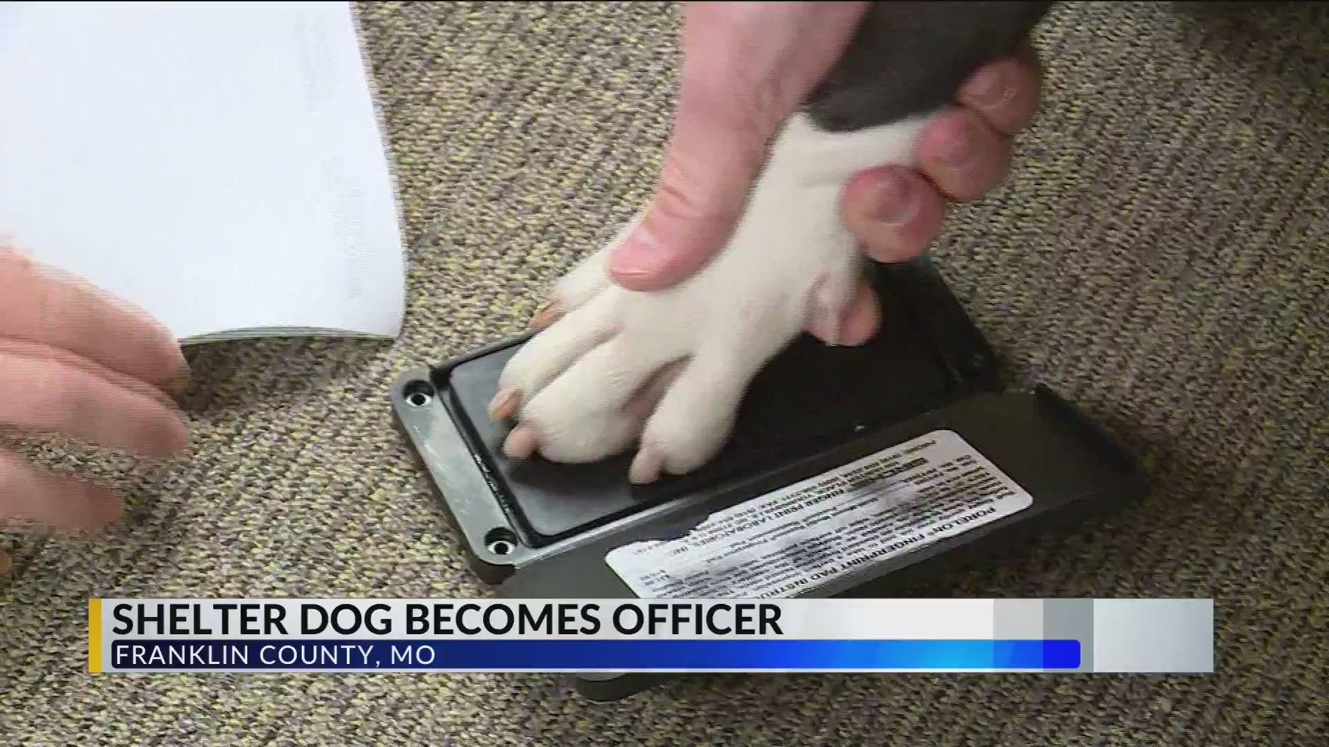 A_shelter_dog_becomes_an_officer_in_Fran_0_20190531223005