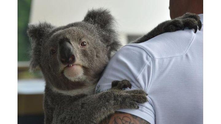 koala_1558188212925.jpg