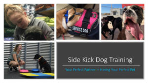 Side Kick Dog Training Gropu Pix