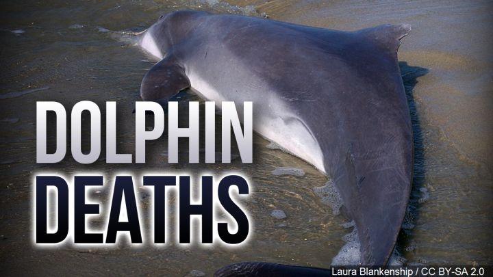 dolphin deaths_1560599916028.jpg.jpg