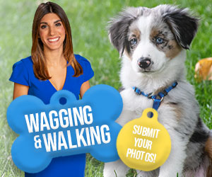 Wagging and Walking Forecast