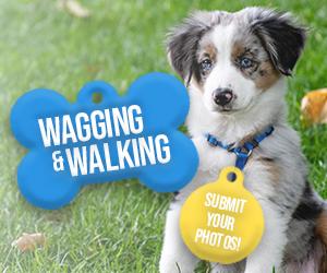 Walking Wagging Forecast