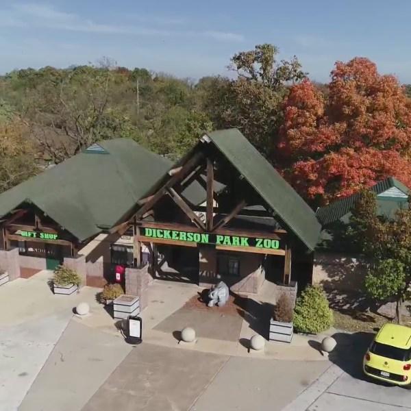 Dickerson Park Zoo endangered species