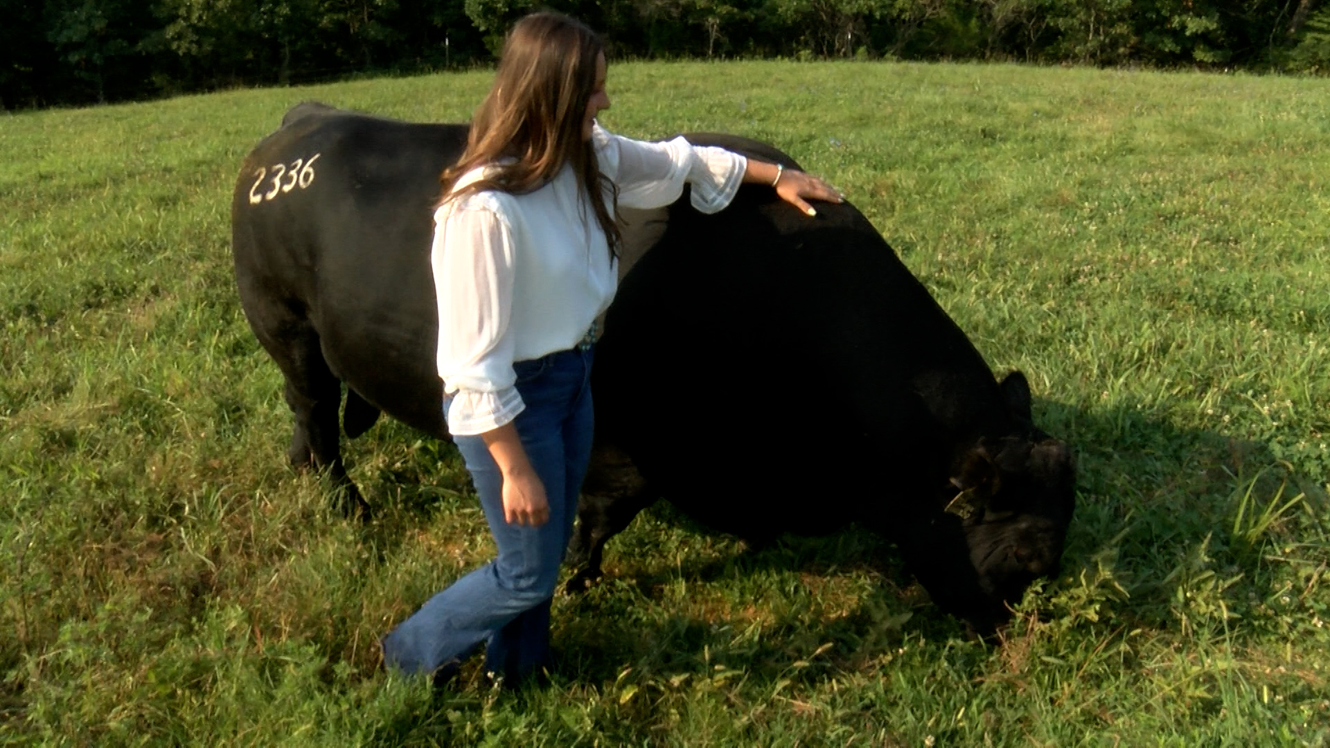 Gilbert Cattle Farm in Oldfield, Missouri
